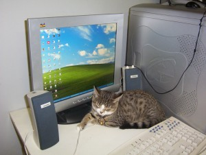cat on a keyboard
